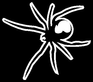araignée - Divers Animaux